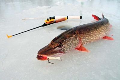 Продажа высококачественных рыболовных товаров